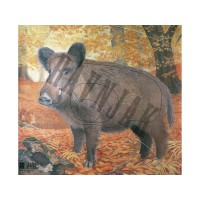 Animal Face Wild Boar